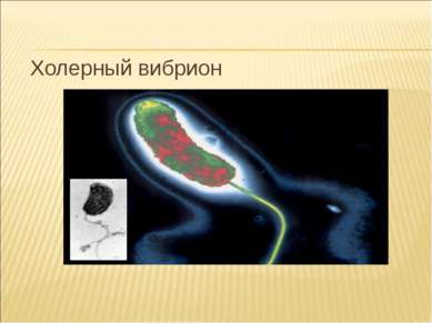 Холерный вибрион