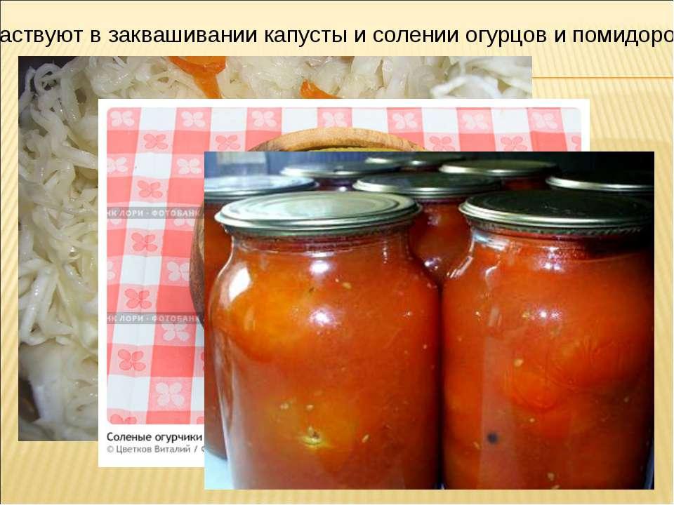 Участвуют в заквашивании капусты и солении огурцов и помидоров.