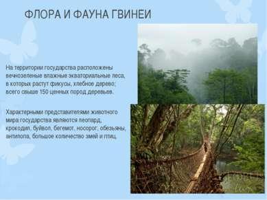 ФЛОРА И ФАУНА ГВИНЕИ На территории государства расположены вечнозеленые влажн...