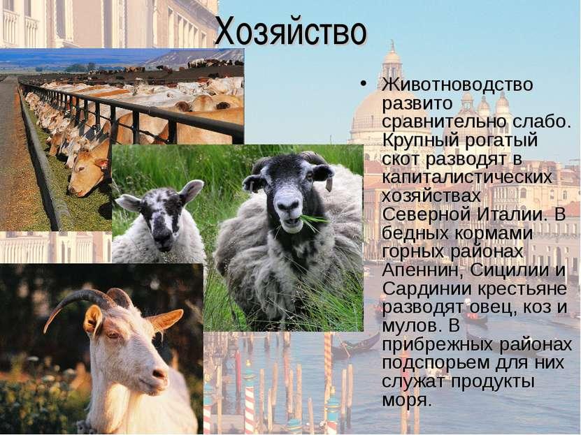Хозяйство Животноводство развито сравнительно слабо. Крупный рогатый скот раз...