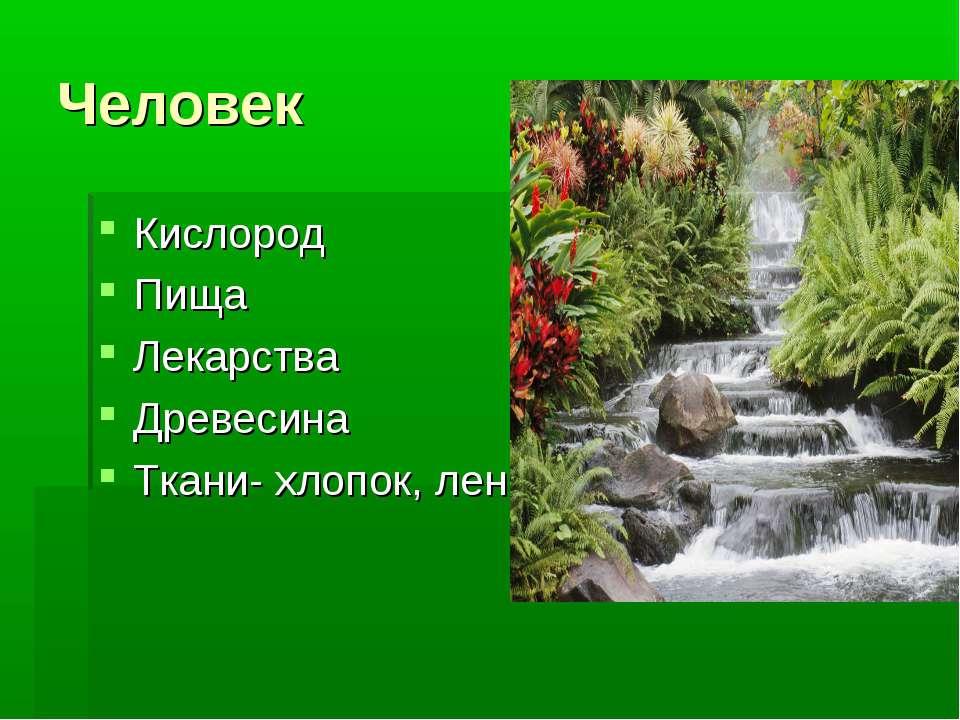 Человек Кислород Пища Лекарства Древесина Ткани- хлопок, лен
