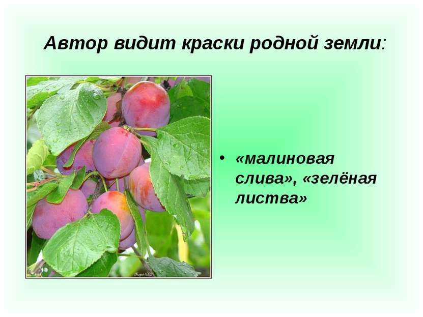 Автор видит краски родной земли: «малиновая слива», «зелёная листва»