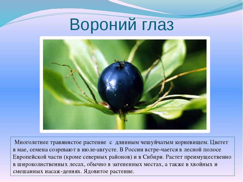 Вороний глаз Многолетнее травянистое растение с длинным чешуйчатым корневищем...