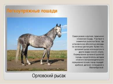Легкоупряжные лошади Самая резвая и крупная, гармонично сложенная лошадь. Уча...