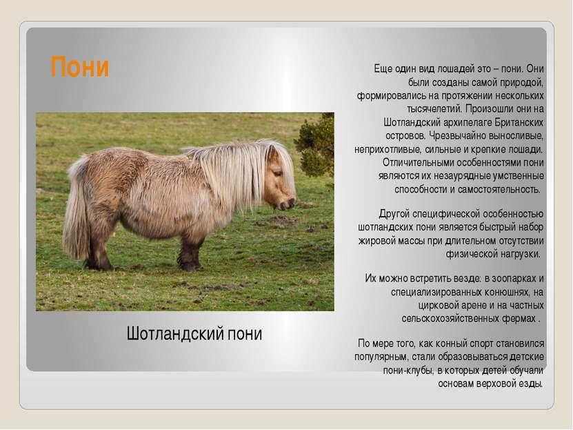 Пони Еще один вид лошадей это – пони. Они были созданы самой природой, формир...