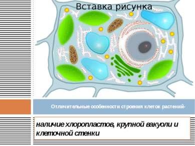 наличие хлоропластов, крупной вакуоли и клеточной стенки Отличительные особен...
