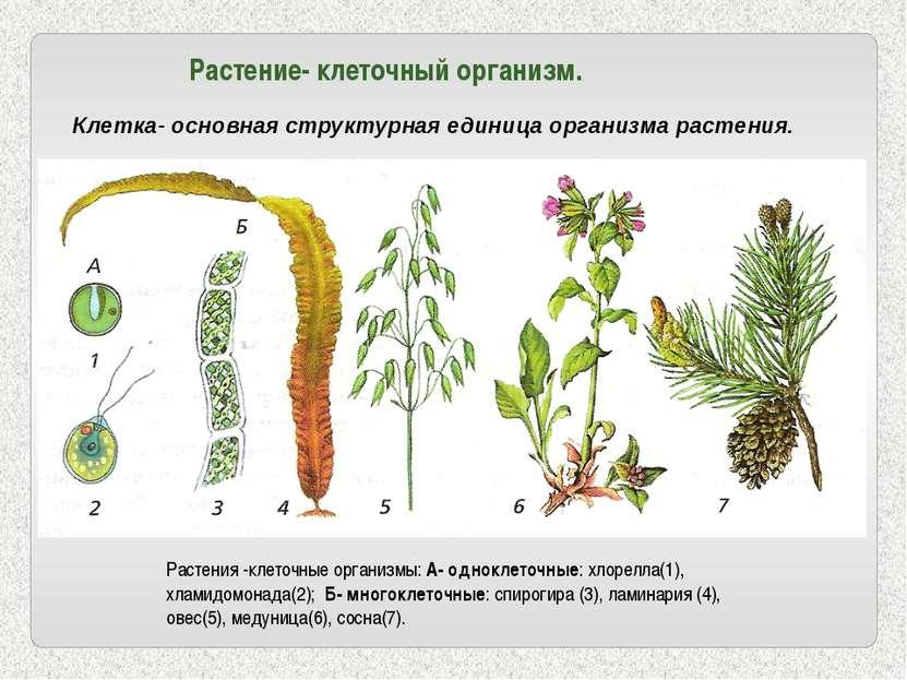Растение- клеточный организм. Клетка- основная структурная единица организма ...