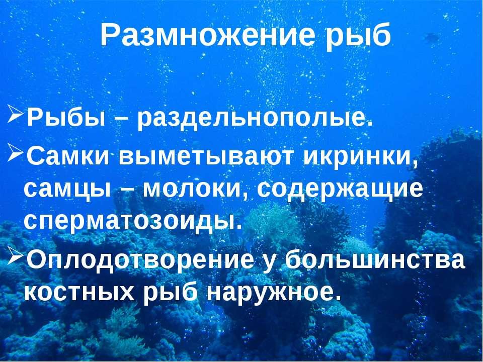 Размножение рыб Рыбы – раздельнополые. Самки выметывают икринки, самцы – моло...