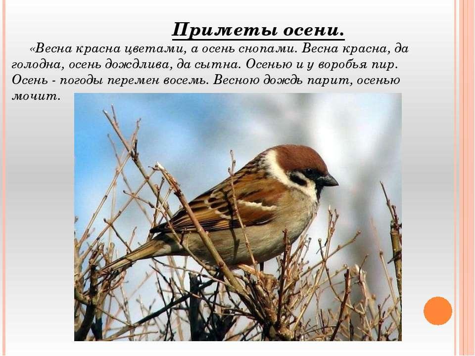 Приметы осени. «Весна красна цветами, а осень снопами. Весна красна, да голод...