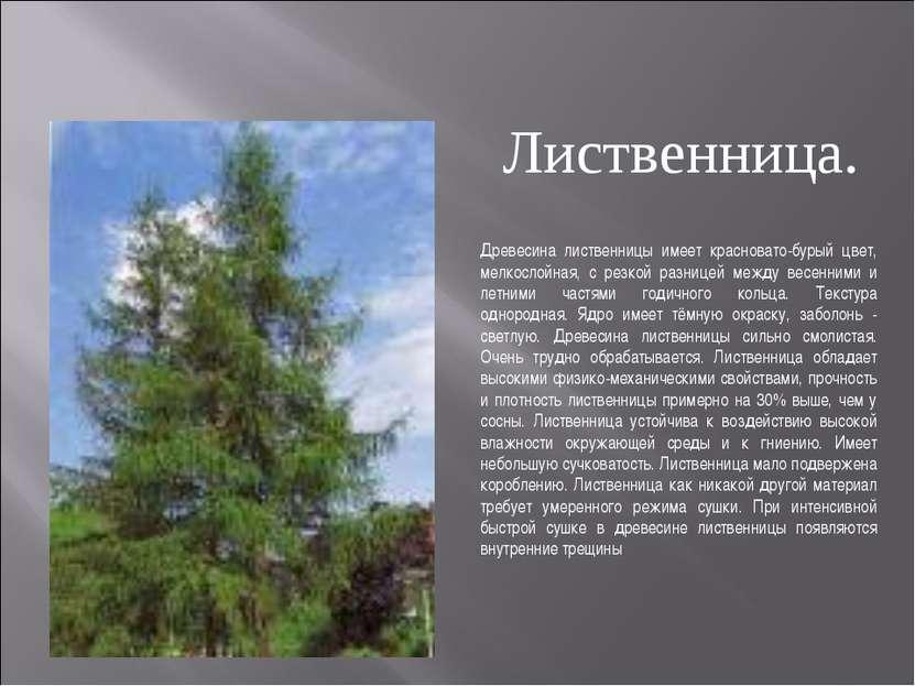 Древесина лиственницы имеет красновато-бурый цвет, мелкослойная, с резкой раз...