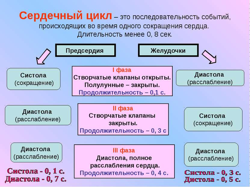 Сердечный цикл – это последовательность событий, происходящих во время одного...