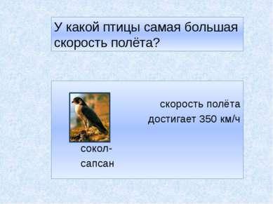 У какой птицы самая большая скорость полёта? скорость полёта достигает 350 км...