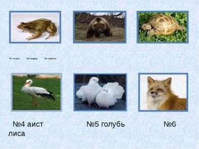 №1 лягушка №2 медведь №3 черепаха №4 аист №5 голубь №6 лиса
