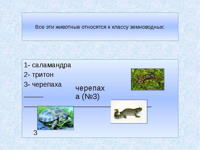 Все эти животные относятся к классу земноводных: 1- саламандра 2- тритон 1 3-...