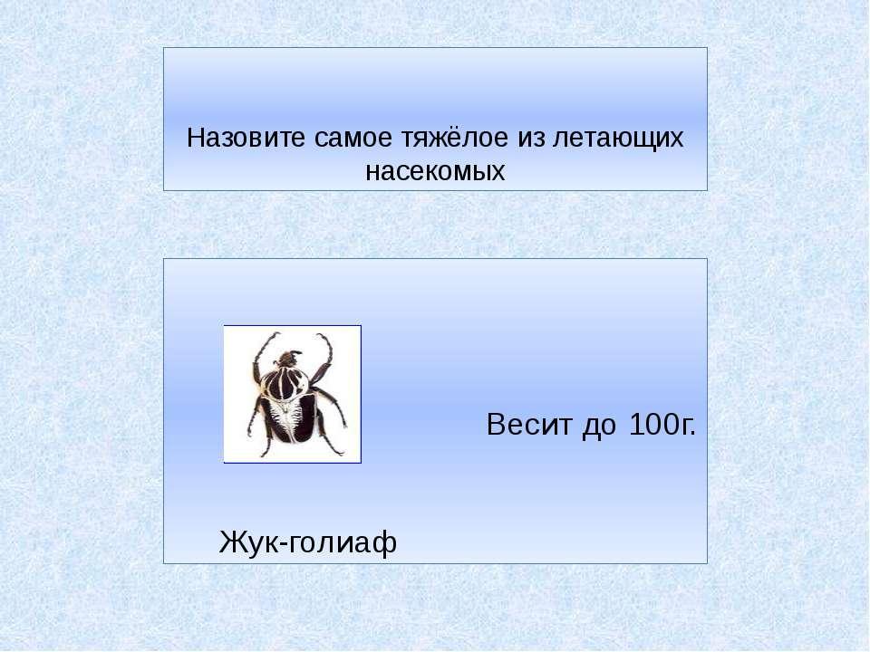 Назовите самое тяжёлое из летающих насекомых Весит до 100г. Жук-голиаф