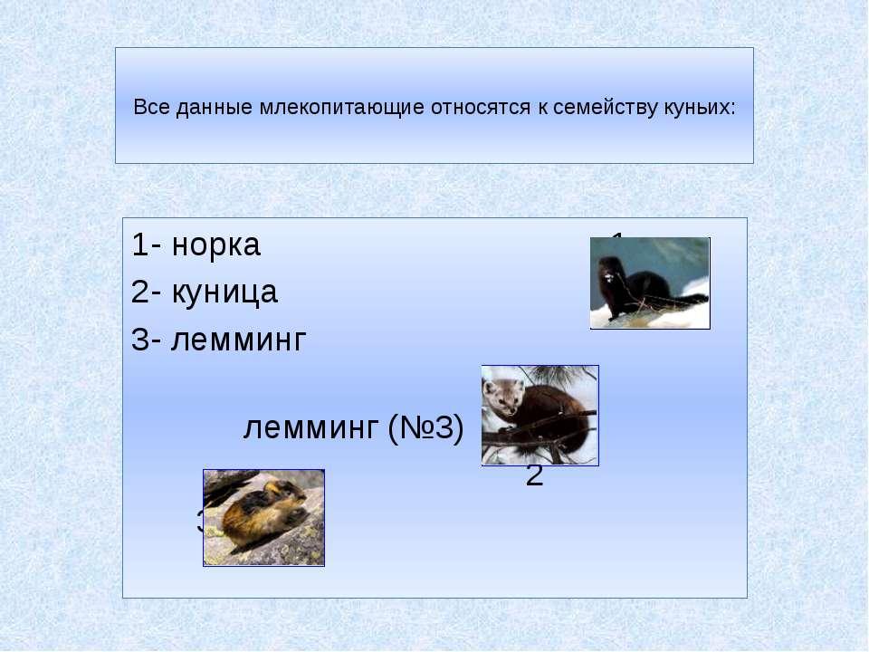 Все данные млекопитающие относятся к семейству куньих: 1- норка 1 2- куница 3...