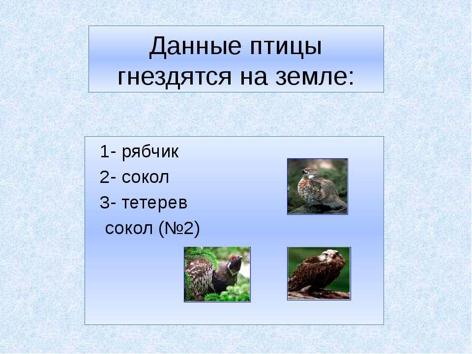 Данные птицы гнездятся на земле: 1- рябчик 2- сокол 1 3- тетерев сокол (№2) 2 3