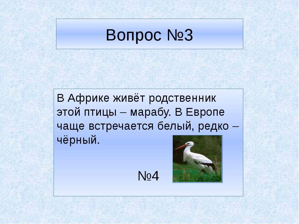 Вопрос №3 В Африке живёт родственник этой птицы – марабу. В Европе чаще встре...