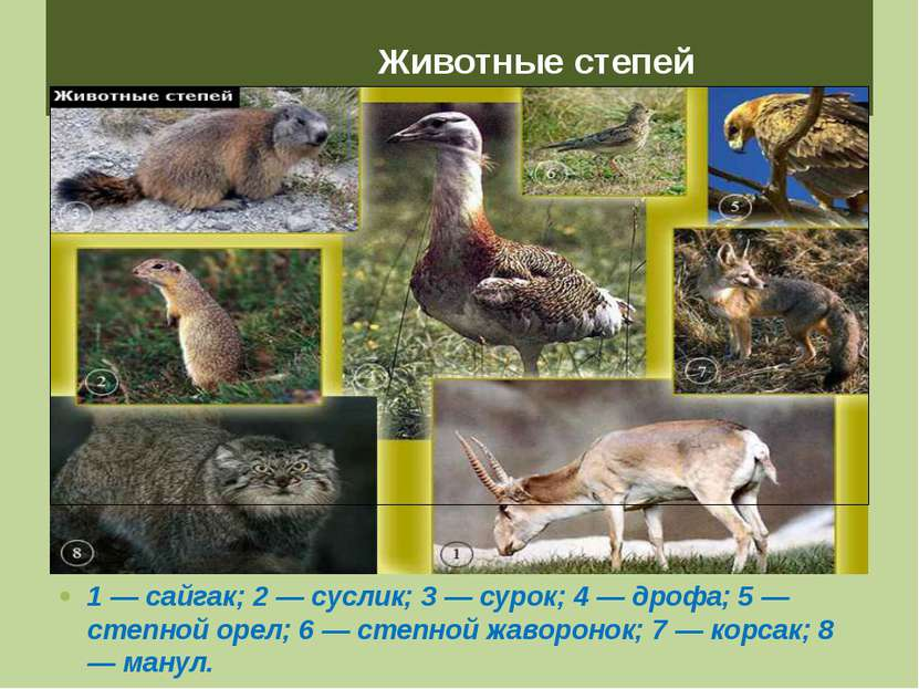 Животные степей 1 — сайгак; 2 — суслик; 3 — сурок; 4 — дрофа; 5 — степной оре...
