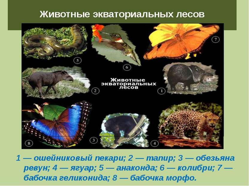 Животные экваториальных лесов 1 — ошейниковый пекари; 2 — тапир; 3 — обезьяна...