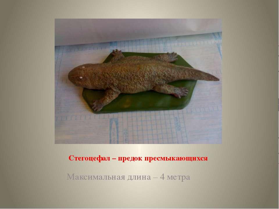 Стегоцефал – предок пресмыкающихся Максимальная длина – 4 метра