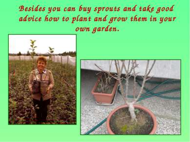Besides you can buy sprouts and take good advice how to plant and grow them i...