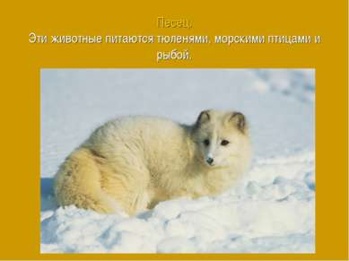 Песец. Эти животные питаются тюленями, морскими птицами и рыбой.