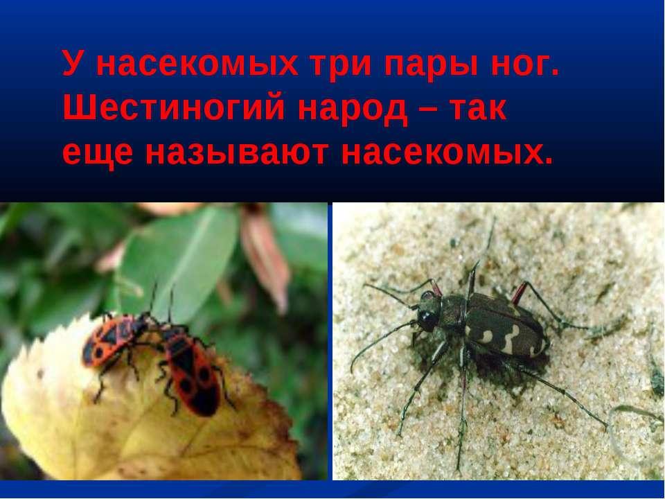 У насекомых три пары ног. Шестиногий народ – так еще называют насекомых.