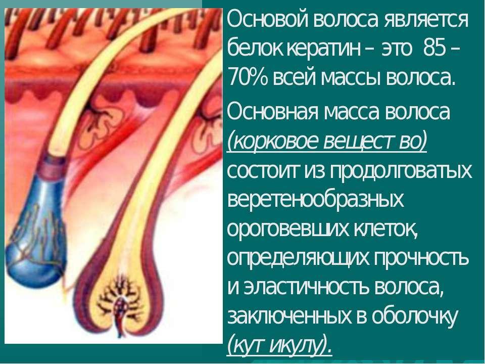 Основой волоса является белок кератин – это 85 – 70% всей массы волоса. Основ...