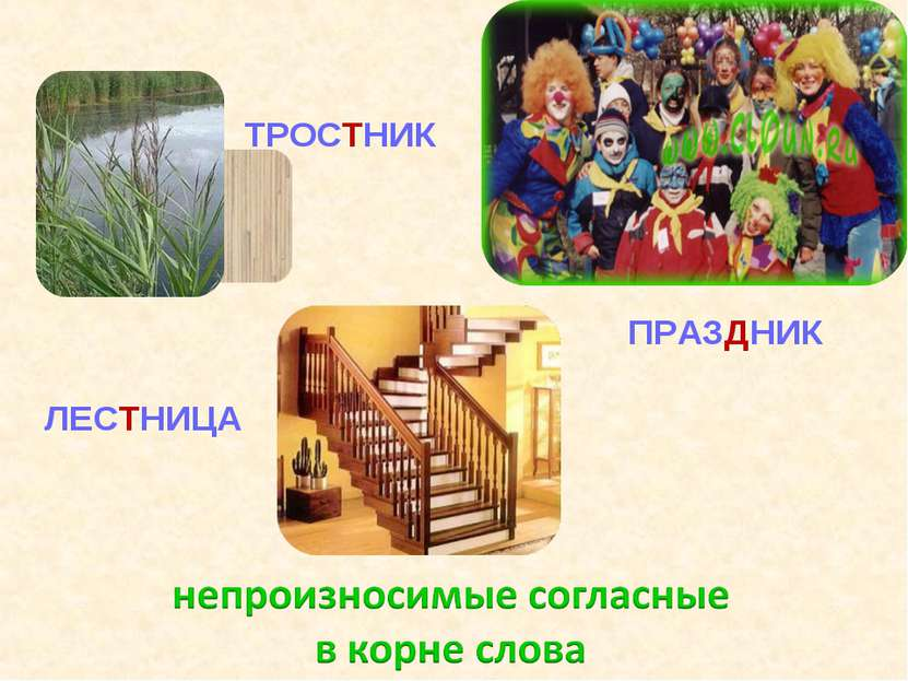ТРОСТНИК ПРАЗДНИК ЛЕСТНИЦА