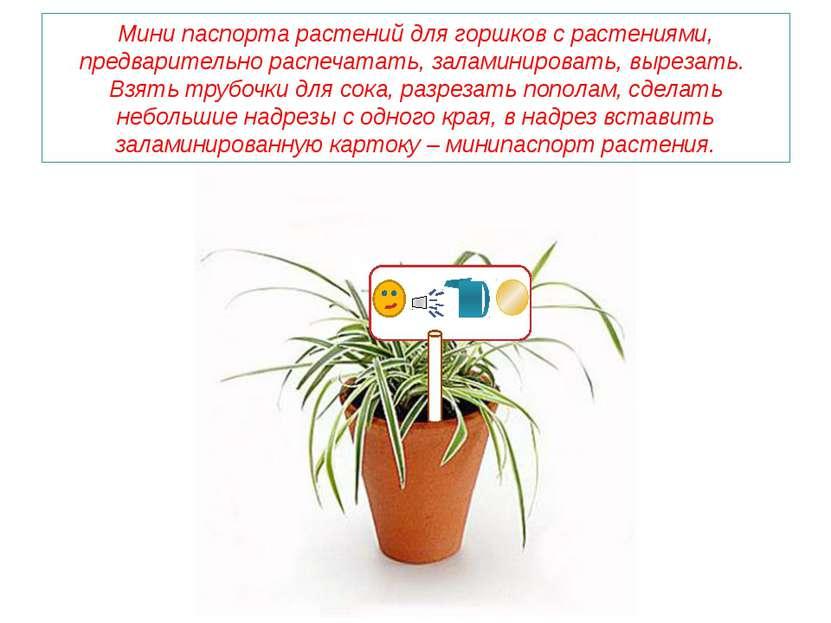 Мини паспорта растений для горшков с растениями, предварительно распечатать, ...