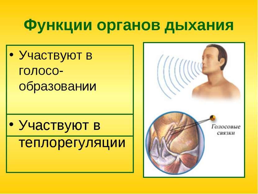 Функции органов дыхания Участвуют в голосо-образовании Участвуют в теплорегул...