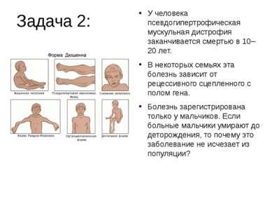 Задача 2: У человека псевдогипертрофическая мускульная дистрофия заканчиваетс...