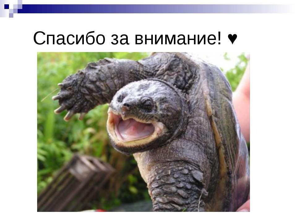 Спасибо за внимание! ♥