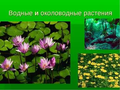 Водные и околоводные растения