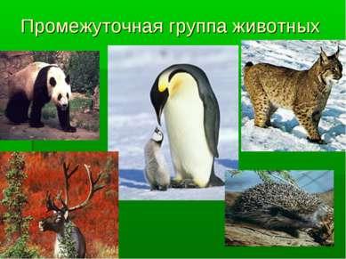 Промежуточная группа животных