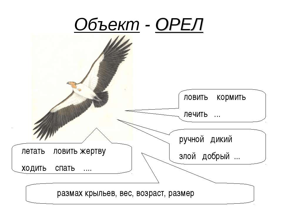 Объект - ОРЕЛ летать ловить жертву ходить спать .... ловить кормить лечить .....