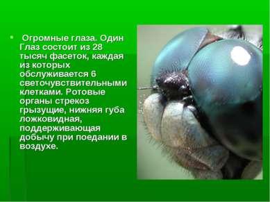Огромные глаза. Один Глаз состоит из 28 тысяч фасеток, каждая из которых обсл...