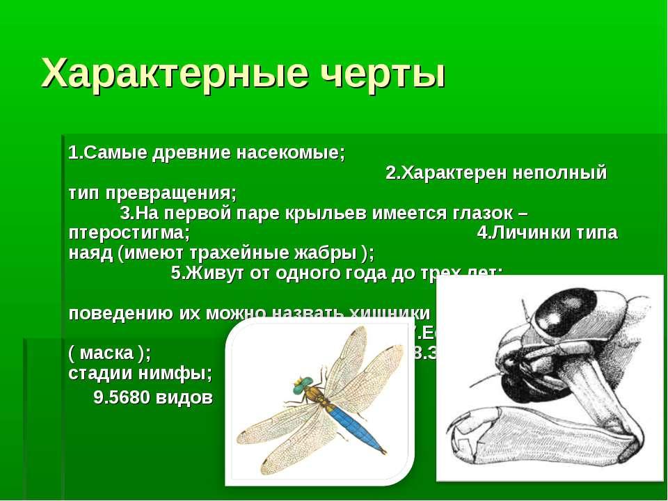 Характерные черты 1.Самые древние насекомые; 2.Характерен неполный тип превра...