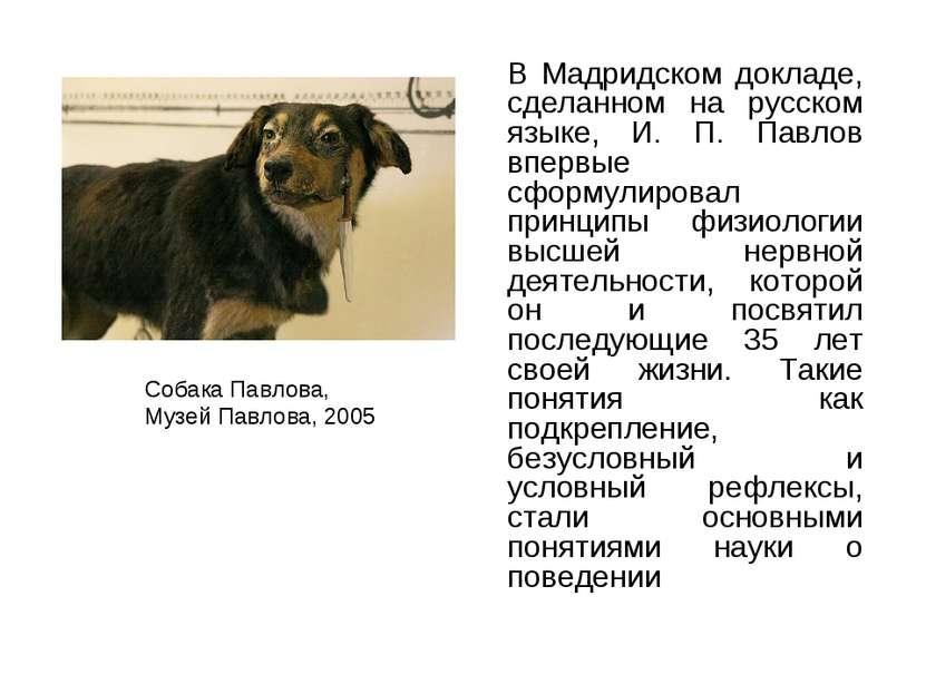 В Мадридском докладе, сделанном на русском языке, И. П. Павлов впервые сформу...
