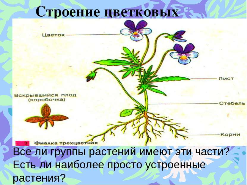 Строение цветковых растений. Все ли группы растений имеют эти части? Есть ли ...