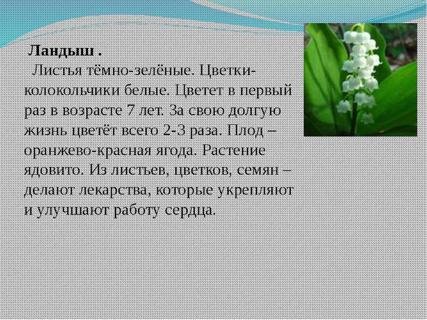 Ландыш . Листья тёмно-зелёные. Цветки-колокольчики белые. Цветет в первый раз...