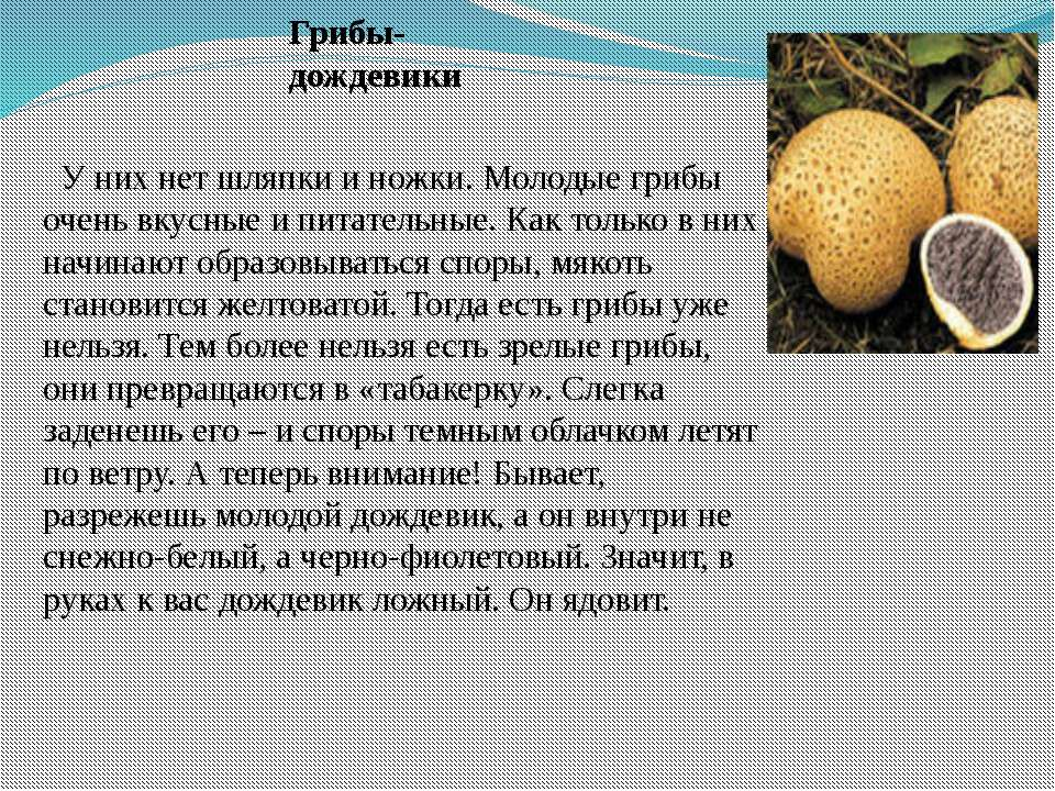 У них нет шляпки и ножки. Молодые грибы очень вкусные и питательные. Как толь...