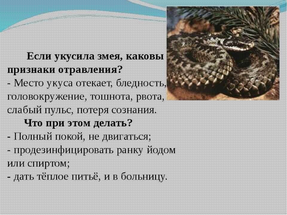 Если укусила змея, каковы признаки отравления? - Место укуса отекает, бледнос...