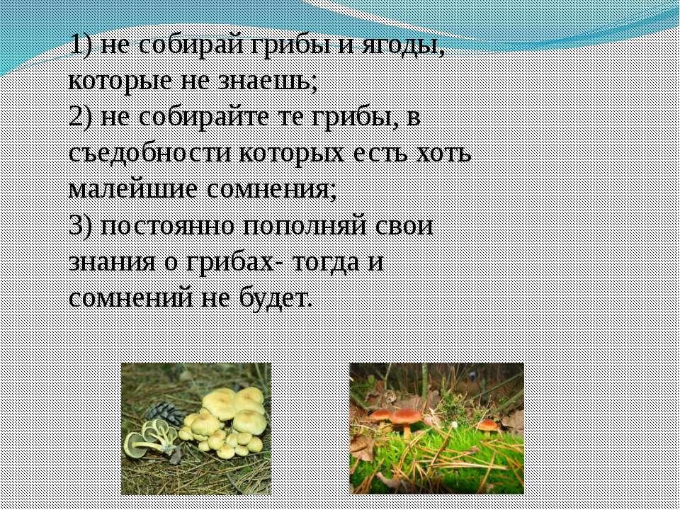 1) не собирай грибы и ягоды, которые не знаешь; 2) не собирайте те грибы, в с...