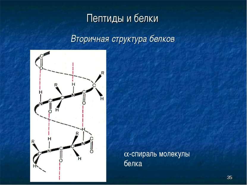 * Пептиды и белки Вторичная структура белков a-спираль молекулы белка