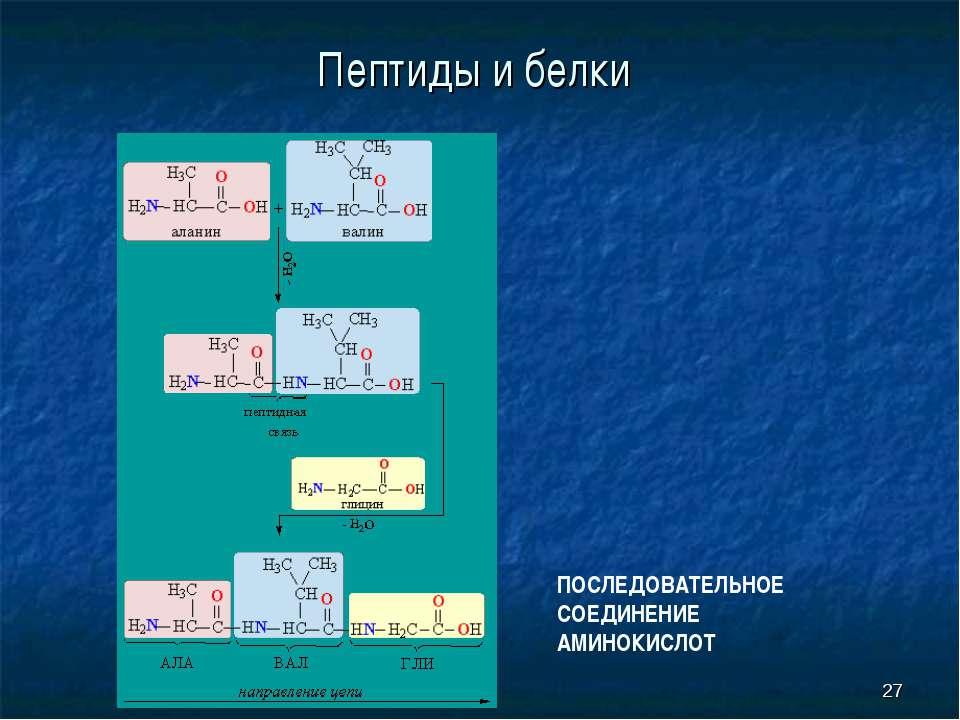 * Пептиды и белки ПОСЛЕДОВАТЕЛЬНОЕ СОЕДИНЕНИЕ АМИНОКИСЛОТ