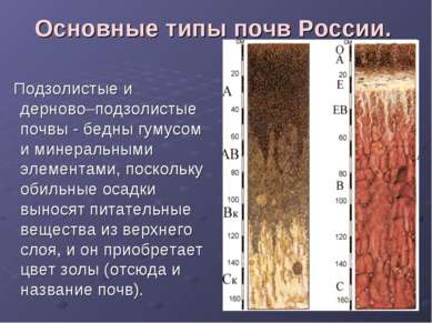 Основные типы почв России. Подзолистые и дерново–подзолистые почвы - бедны гу...