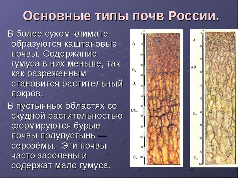 Основные типы почв России. В более сухом климате образуются каштановые почвы....