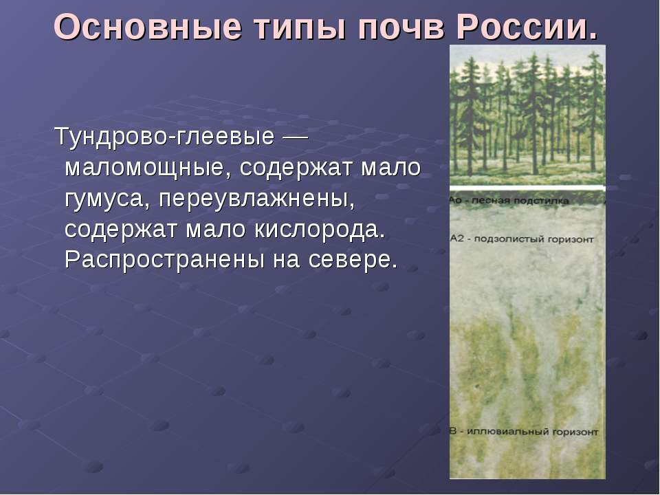 Основные типы почв России. Тундрово-глеевые — маломощные, содержат мало гумус...